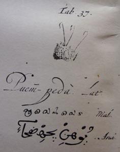 Tab. 37